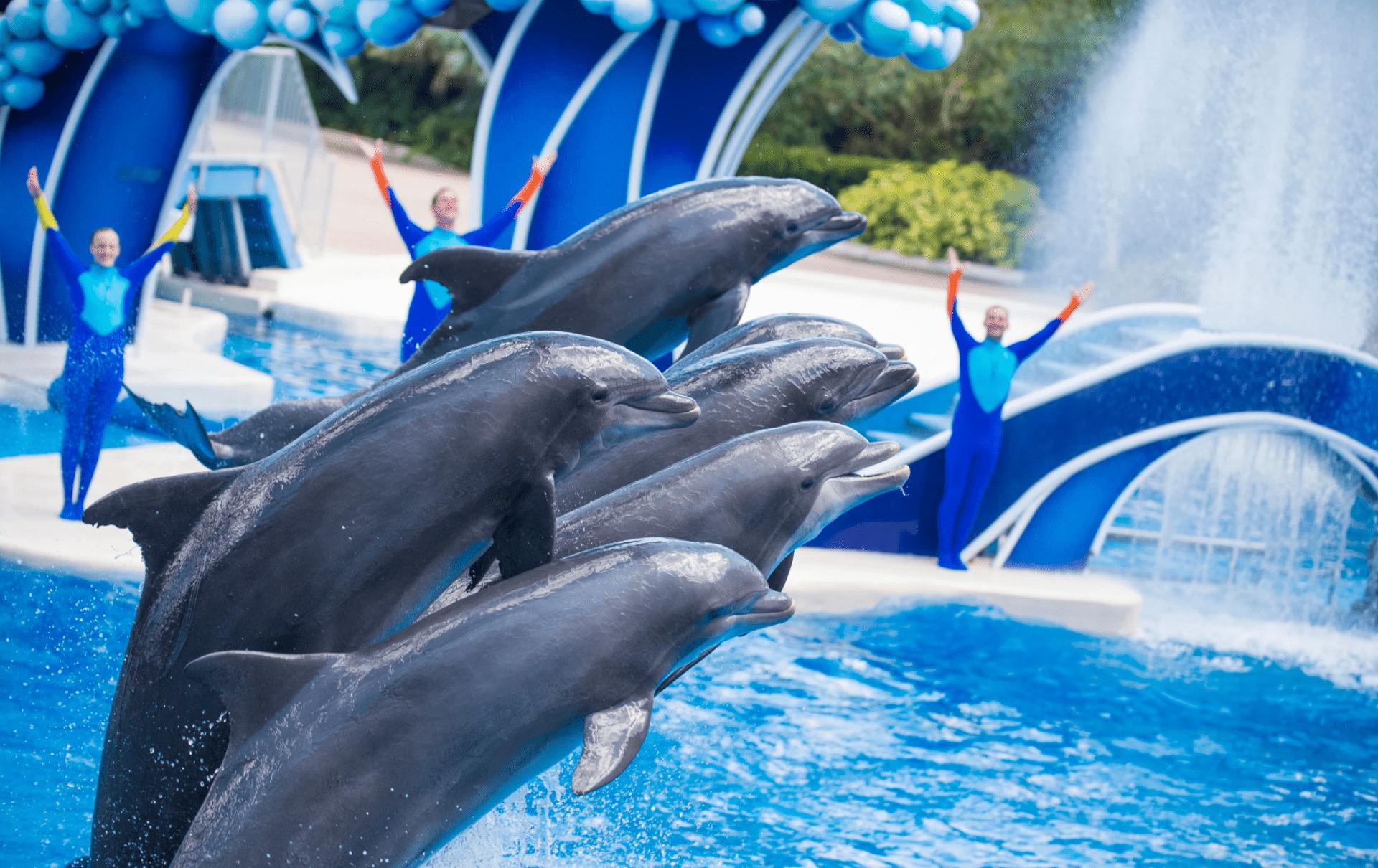 SeaWorld Orlando 101