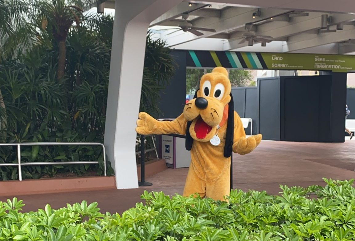 Where Can You Disney Characters at Walt Disney World Now-Pluto